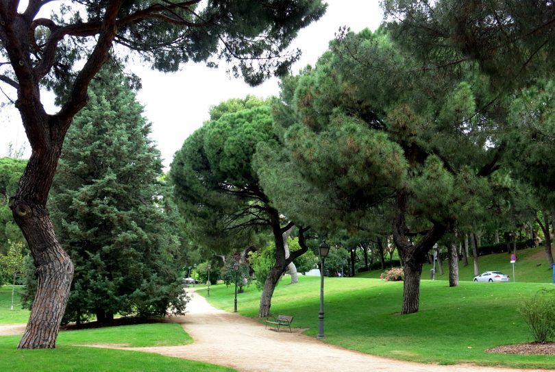 trees and walking path in park