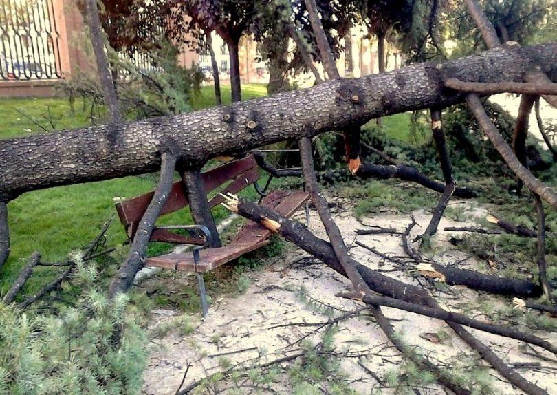 Madrid: killer trees