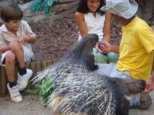 children_with_porcupine-Madrid-Spain-de242cf9fed940df9ebd093c115bad5d_c