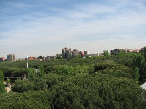 trees at la casa de campo park in madrid