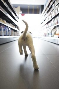 puppy running in pet shop