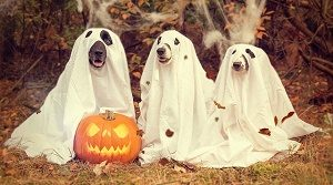 three dogs in halloween costume